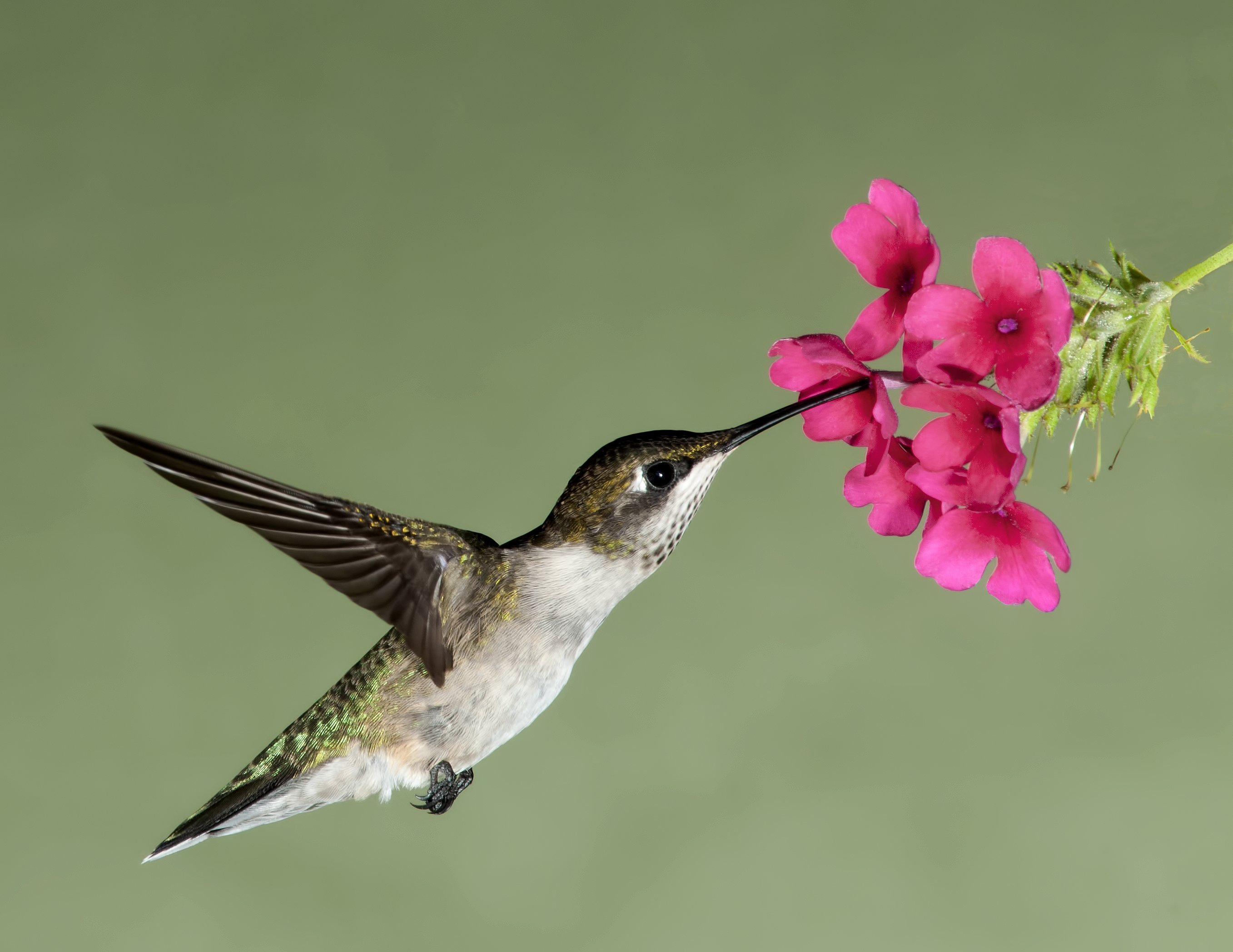 3-But-just-like-the-hummingbird-we-have-evoled-adapted-for-efficiency